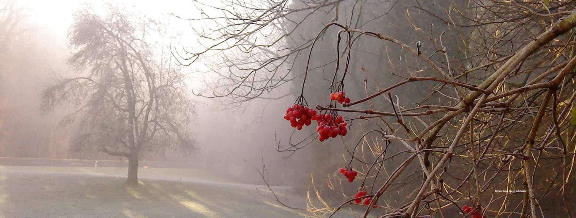 Herbstbild mit Nebel.